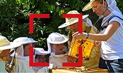 Bienen-Fortbildung